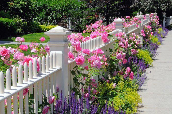 Hàng rào với các loại hoa