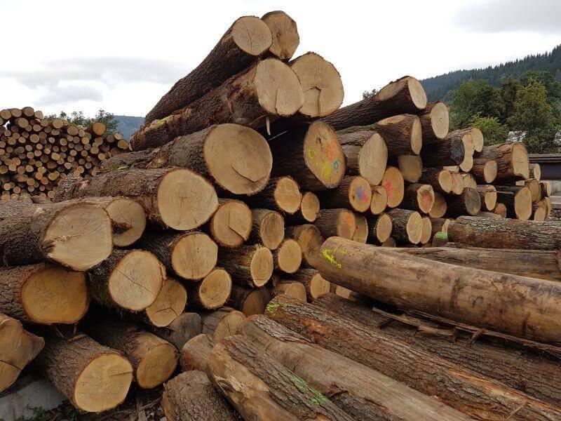 Gỗ Walnut là gì ? Ứng dụng của gỗ Óc Chó trong sản xuất